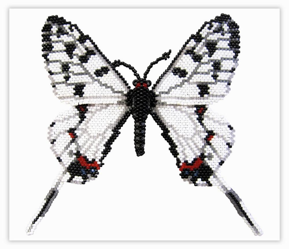 Бабочка Серицин Монторела